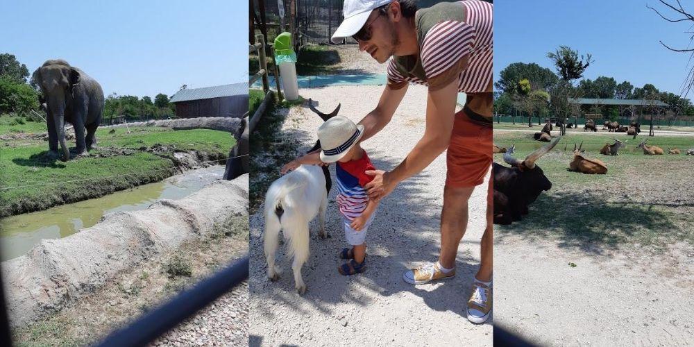 copil care mangaie o capra