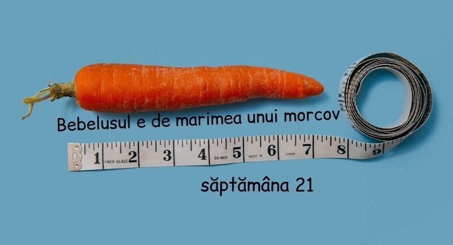 morcov